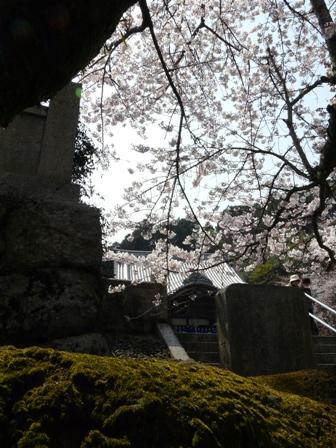 久妙寺の桜 3