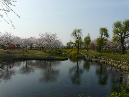 福徳泉公園の桜 1