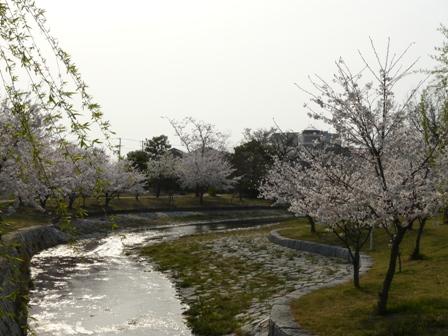 福徳泉公園の桜 3