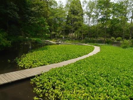 筑波実験植物園 池 2