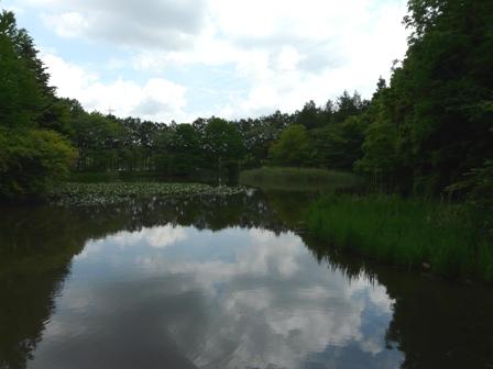 筑波実験植物園 池 1