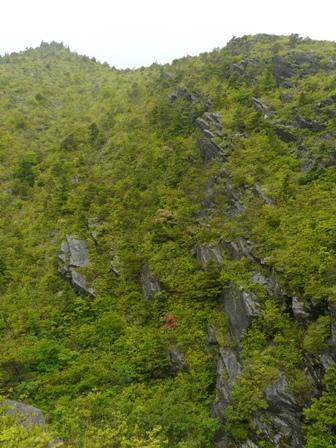 銅山越 登山道から 3