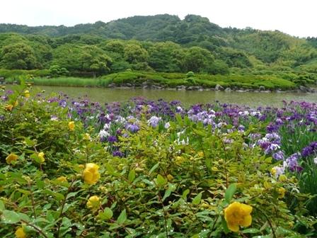 南楽園 花菖蒲 4