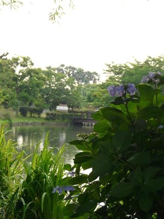 ひょこたん池公園 紫陽花 2