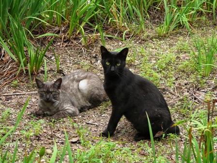 松山総合公園 猫たち