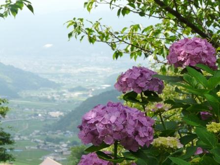 紫陽花風景 2