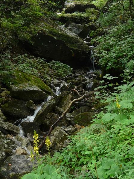 瓶ヶ森林道 小さな滝とオタカラコウ