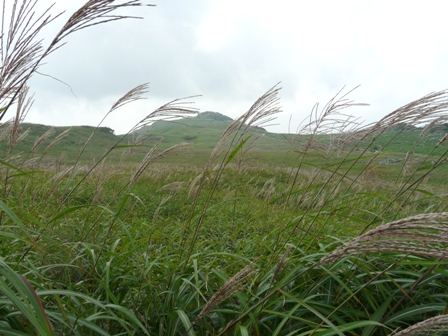 四国カルスト ススキの景色 1