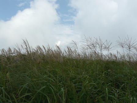 四国カルスト ススキの景色 2