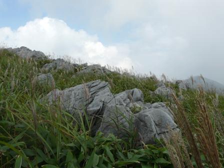 四国カルスト ススキの景色 3