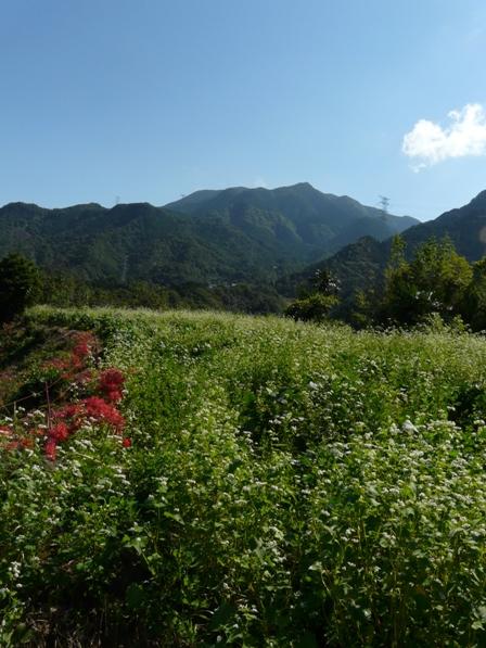 久谷のソバ畑 3