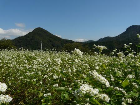 久谷のソバ畑 2