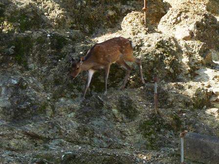 栗の里公園 鹿牧場 1