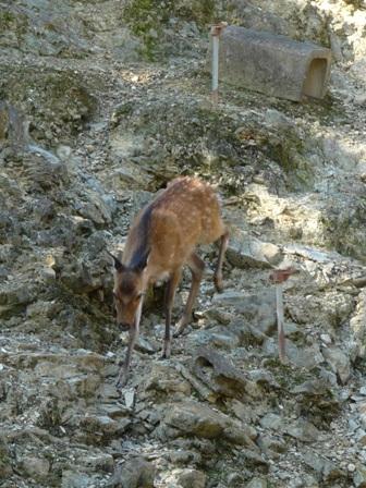 栗の里公園 鹿牧場 2