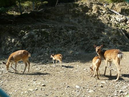 栗の里公園 鹿牧場 3