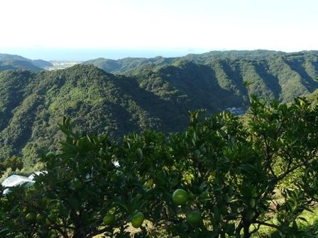 伊予市平岡からの眺め 8