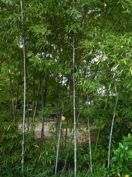 森の交流センター クロチク