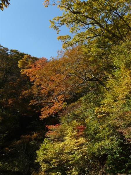 瓶ヶ森林道の紅葉 1
