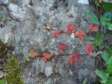 瓶ヶ森林道の紅葉 3