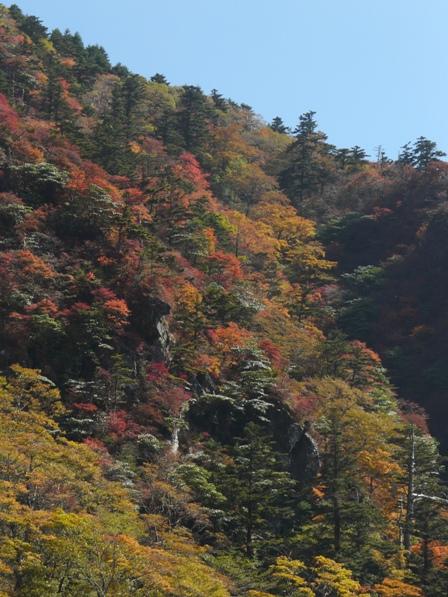 瓶ヶ森林道の紅葉 7