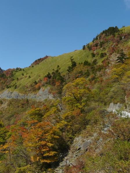 瓶ヶ森林道の紅葉 10