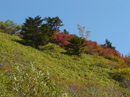 瓶ヶ森林道の紅葉 11