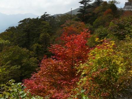 瓶ヶ森林道の紅葉 12