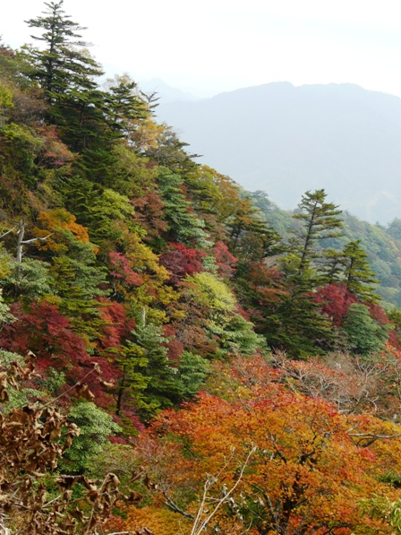 瓶ヶ森林道の紅葉 13