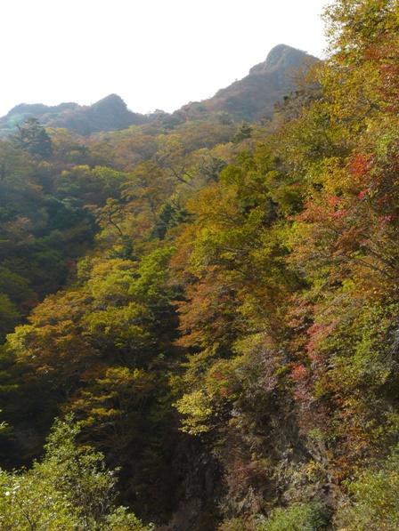 瓶ヶ森林道の紅葉 17