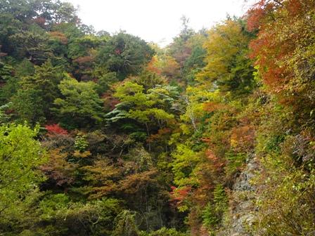瓶ヶ森林道の紅葉 19