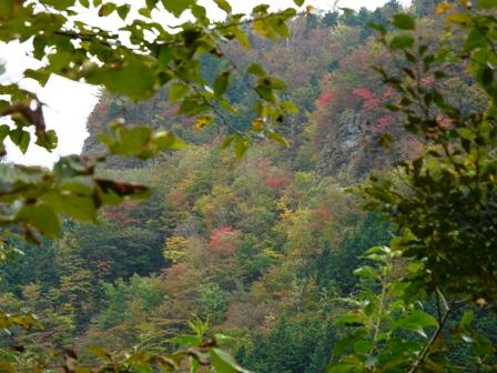 瓶ヶ森林道の紅葉 21