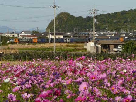浅海原のコスモス 8