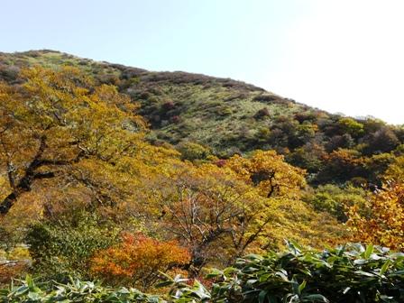 大川嶺付近 黄葉・紅葉 8