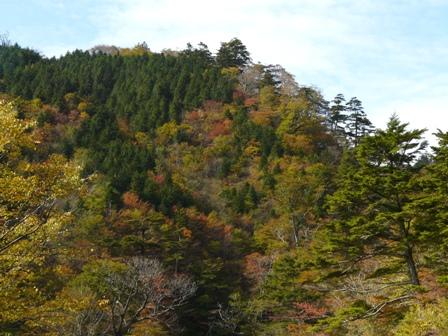 大川嶺付近 黄葉・紅葉 9