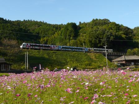 釜倉のコスモスとアンパンマン列車