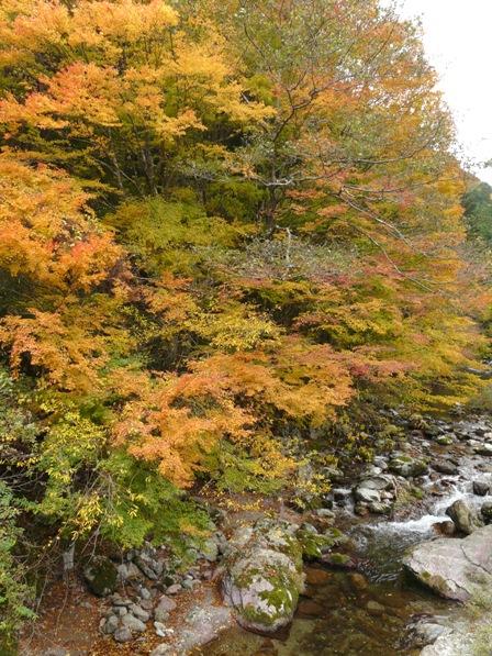 小田深山渓谷 紅葉 3