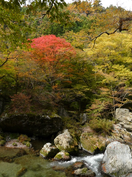小田深山渓谷 紅葉 6