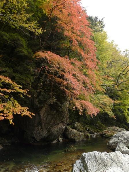 小田深山渓谷 紅葉 14