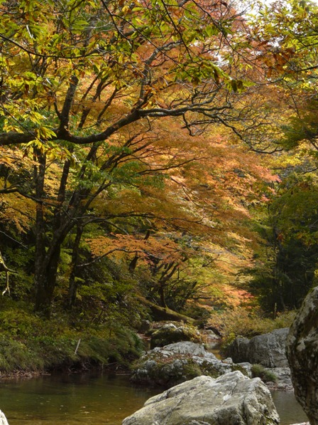 小田深山渓谷 紅葉 19