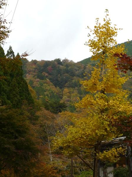 小田深山渓谷 紅葉 20