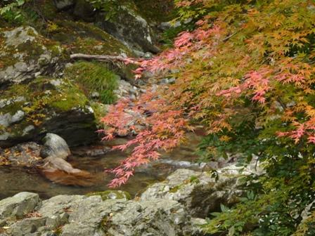 小田深山渓谷 紅葉 22