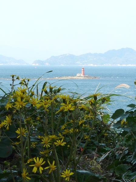 大角海浜公園 ツワブキ 2