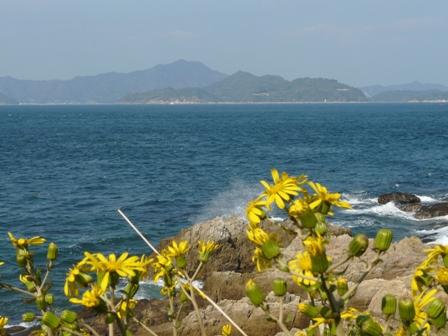 大角海浜公園 ツワブキ 4