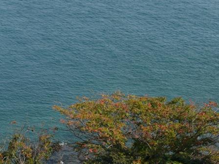 大角海浜公園 紅葉 2