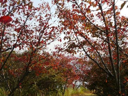 開山公園 紅葉 1