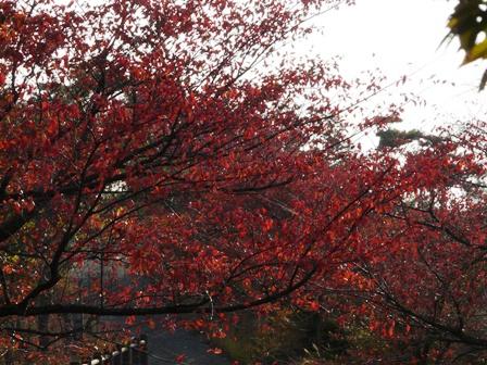 開山公園 紅葉 2