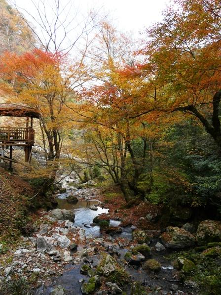 長沢の滝 紅葉 5