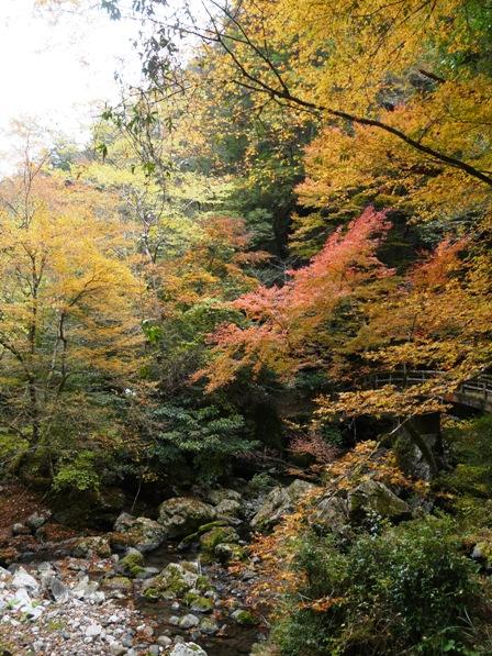 長沢の滝 紅葉 6