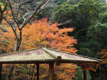 長沢の滝 紅葉 8