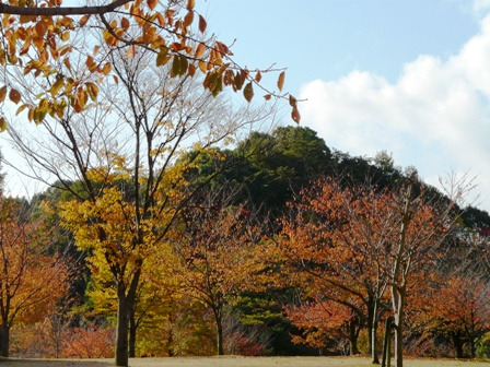 松山総合公園 紅葉 1